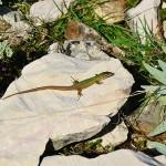 Zvieratá a príroda - Náučný chodník Biserujka