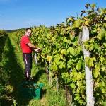 Vinohrad - Vínna pivnica Čubranić
