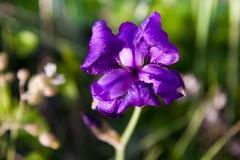 Kvety Baška, Krk - Chorvátsko